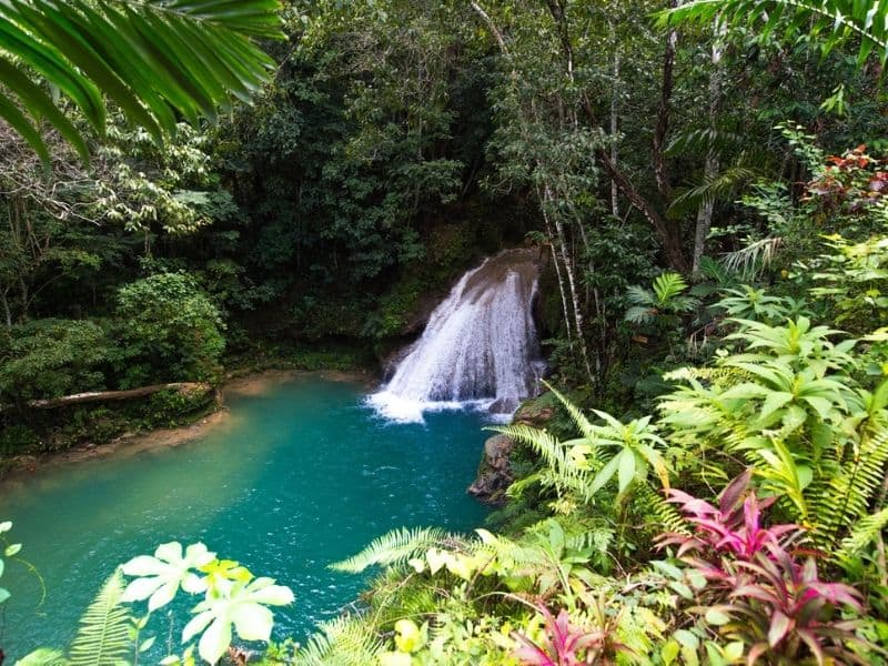 Blue Hole, Ocho Rios, Jamaica.Waterfall surrounded by rainforest and plants.