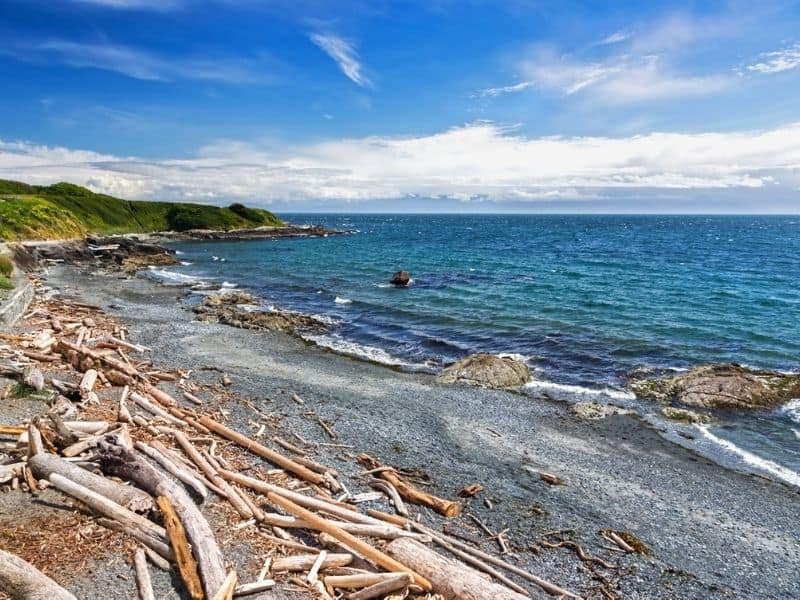 Driftwood along Dallas Road Beach in Victoria, BC Canada