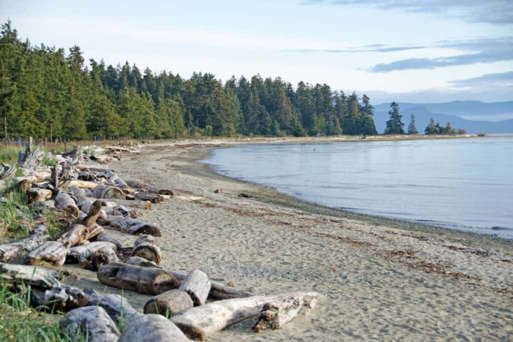 Forest and Beach with driftwood. Rathtrevor Provincial Park